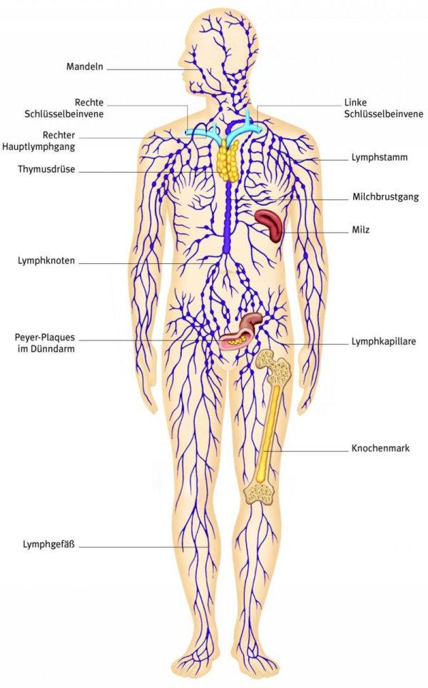 Lymphgefässe